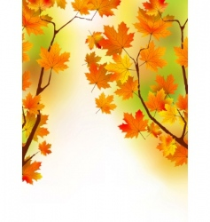autumn maple leaves in sunlight vector image