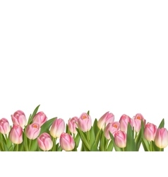 Blossoming tulips decorative border eps 10 vector