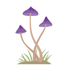 Poisonous mushroom nature food vegetarian healthy vector