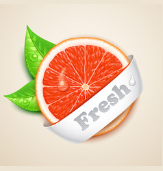 fresh grapefruit vector image vector image