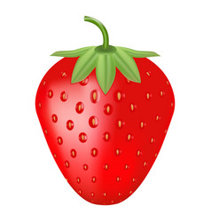 single fresh ripe strawberry isolated on a white vector image vector image