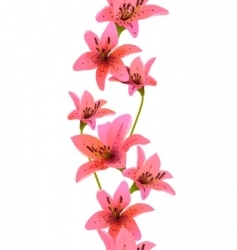 vertical seamless pattern with lilies vector image vector image