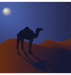 Night camel vector