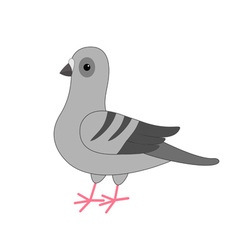 Dove bird gray pigeon cute cartoon character on vector