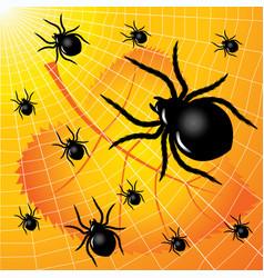 spider web vector image vector image
