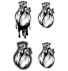 Human heart set vector