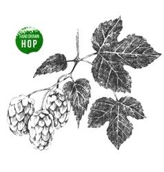 Hand drawn hop brunch vector