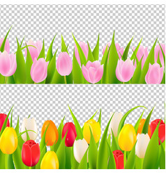 Tulip border with transparent background vector