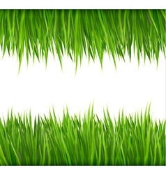 Nature background with green grass vector