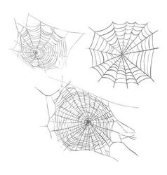 spiderweb sketch vector image
