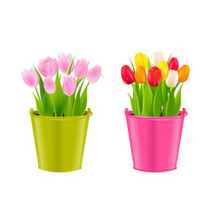 Tulips in pots vector
