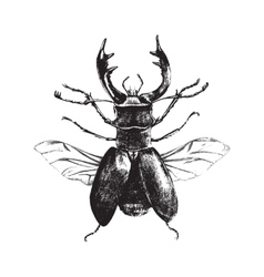 Hand drawn deer beetle vector