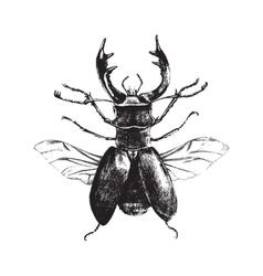 Hand drawn deer beetle vector image