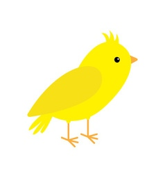 Canary bird yellow feather white background vector
