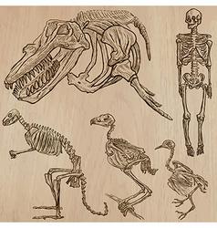 Bones skulls skeletons - freehands vector