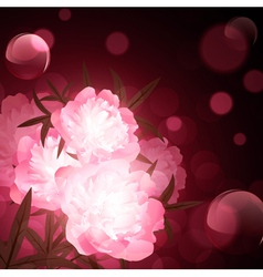 flowers over holiday background vector image