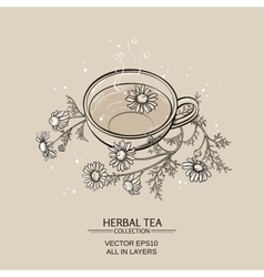 cup of camomile tea vector image