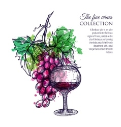 Red wine with grape vector