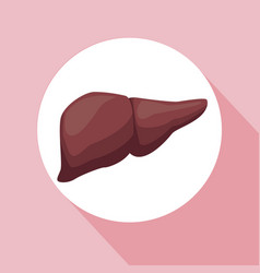 color background with circular frame liver organ vector image