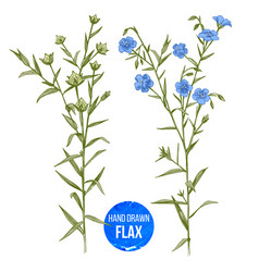 hand drawn colorful flax flowers and seeds vector image