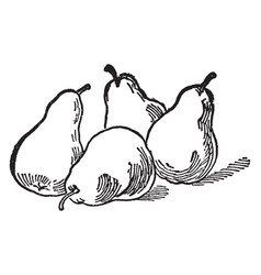 Four pears vintage vector
