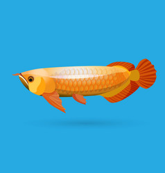 Isolated golden arowana Freshwater bony fish vector image