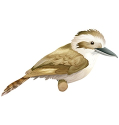 Kookaburra vector