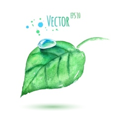 Watercolor leaf with water drop vector