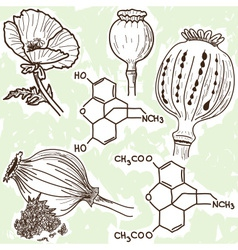 Narcotics - poppy and opium vector
