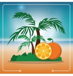 Orange fruit and summer concept vector