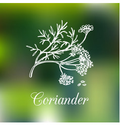 Coriander hand drawn vector