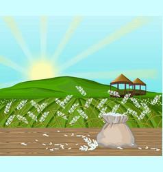 Rice fields landscape sunshine background vector