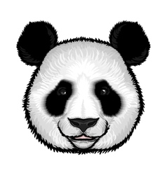 Cute fluffy panda face vector