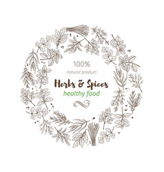 hand drawn sketch herbs and spices vector image vector image