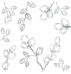 Floral background with pussy willow vector