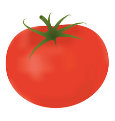 single fresh ripe tomato isolated on a white vector image vector image