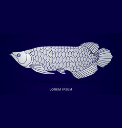 Arowana fish graphic vector