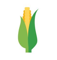 flat corn cob vector image vector image