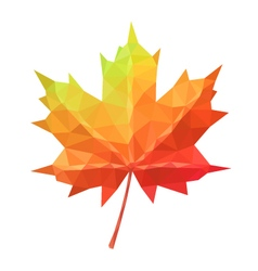 Low poly maple leaf vector image