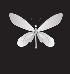 Metal butterfly vector