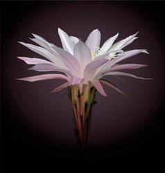 cactus flower vector image