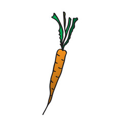 cartoon carrots drawing by vector image vector image