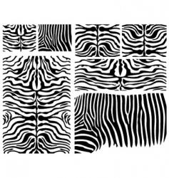 zebra skins vector image