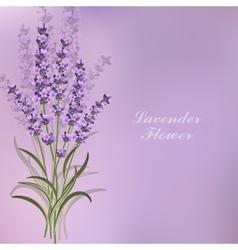 Beautiful lavender flowers on violet background vector image