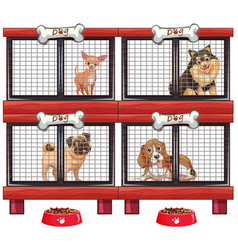 four types of dogs in cage vector image