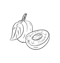Hand drawn plum sketches vector image