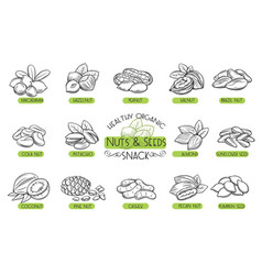 Set icons nuts and seeds vector