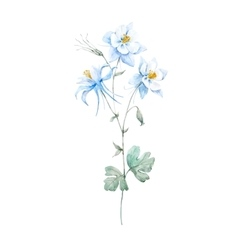 Watercolor blue akilegiya flower vector