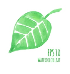 Watercolor leaf vector