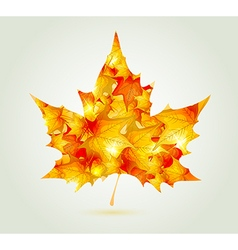 Abstract autumn maple leaf vector